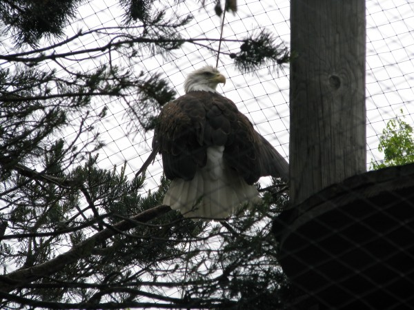 Kieran's 5th Grade Trip - Bald Eagle
