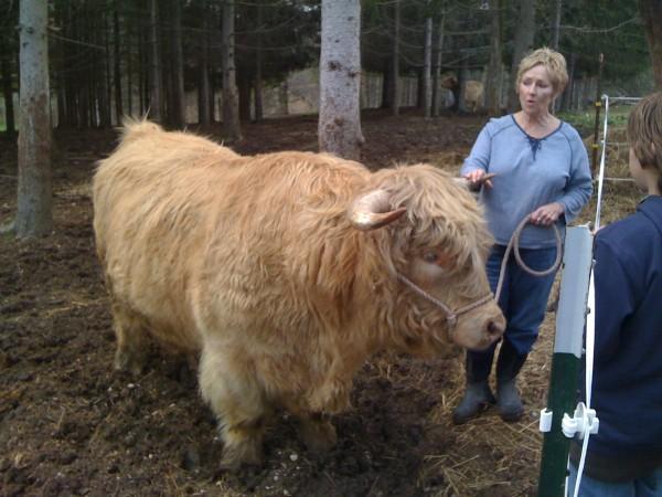 The Pruitt Bull
