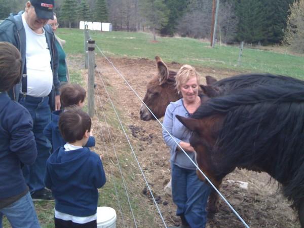 Feeding the Horses 2