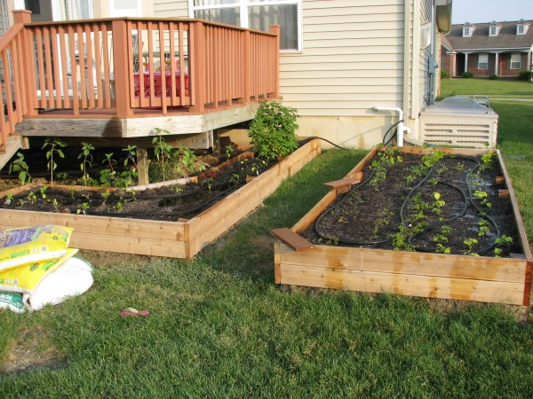 Both Beds Done - Getting Watered
