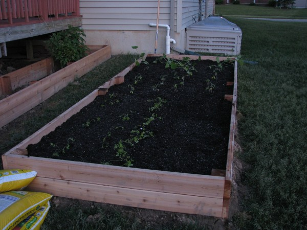 Building Garden Beds - First Plants