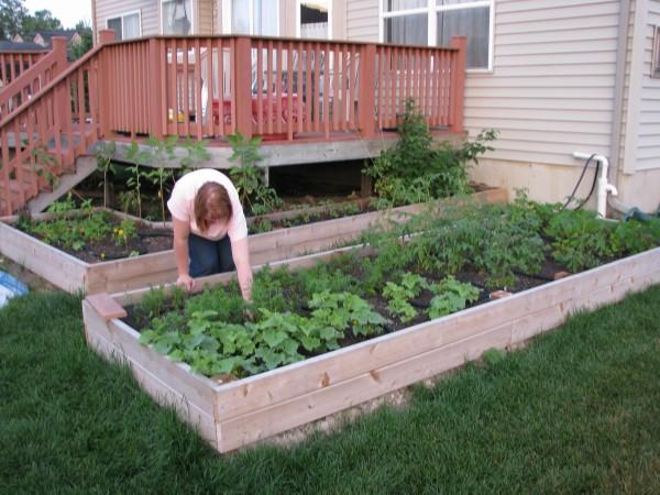 Gardener and Her Garden