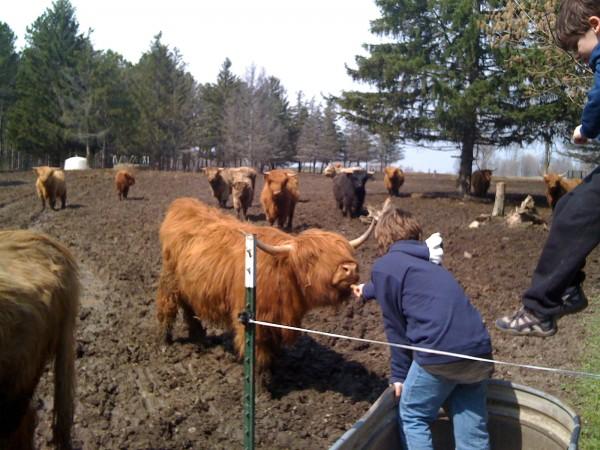 Kieran Feeding a Cow
