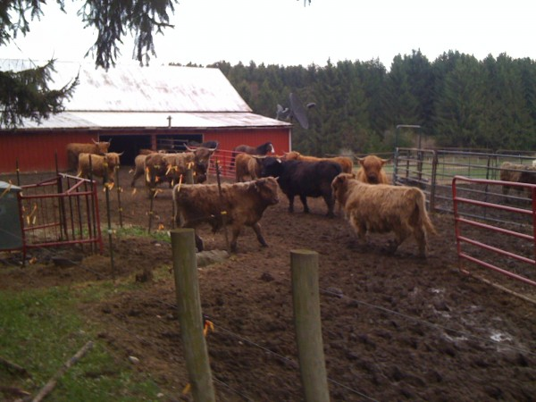 Some of the Herd