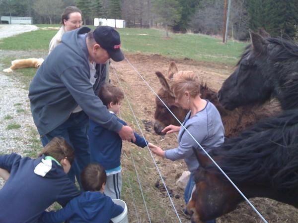 Feeding the Horses 1